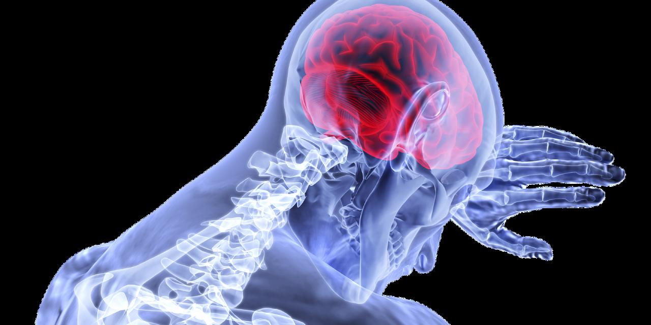 Studiu: fructoza poate fi produsă în creierului omului